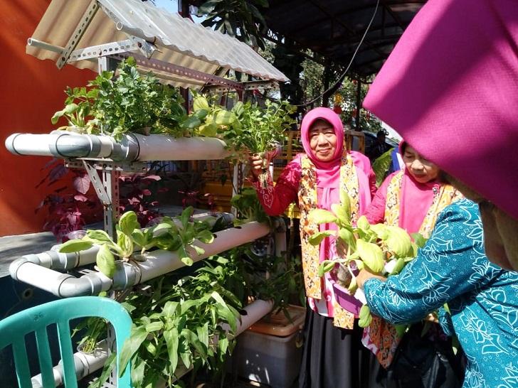 TP PKK Kota Cirebon sebelum penilaian panen sayuran hidoponik yang ada di halaman kantor Kelurahan Kecapi